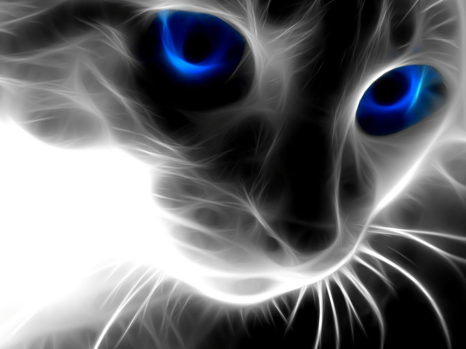 Zika Download: Wallpaper Magic Cat Windows 7