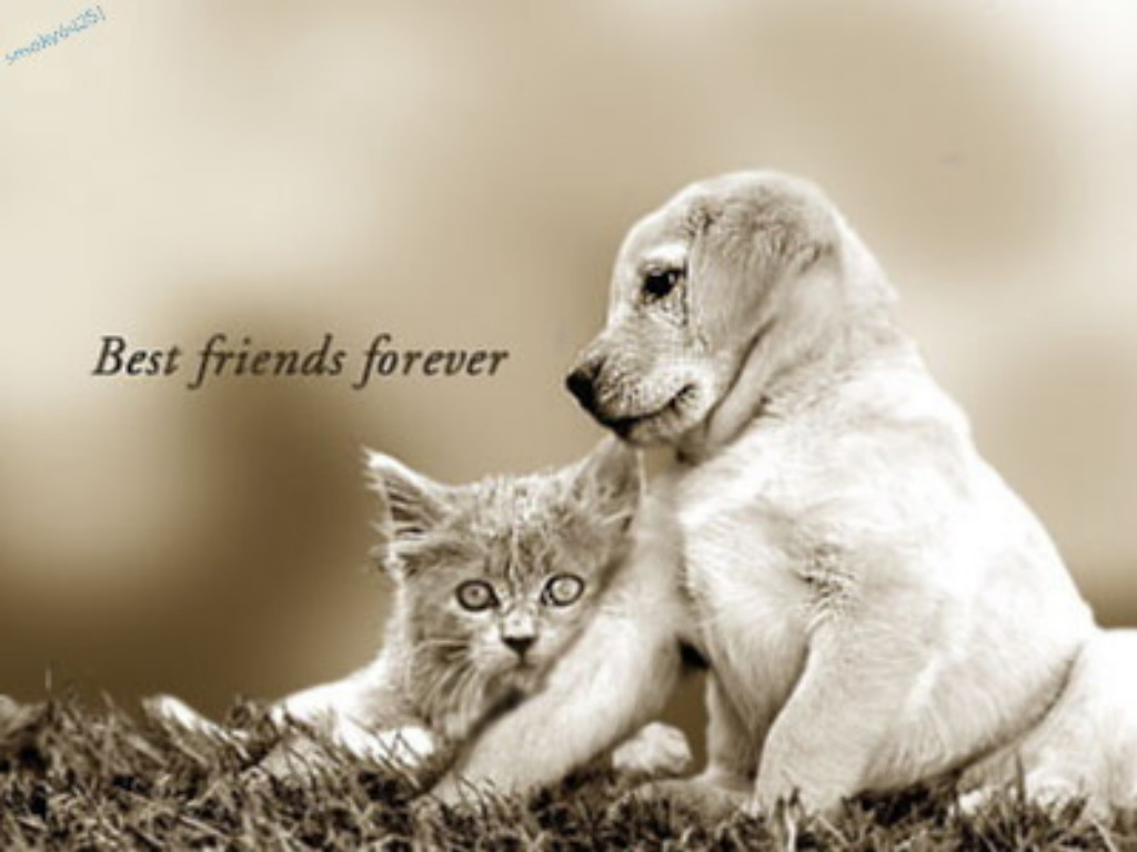 Sivachan friends forever for Best dogs for companionship