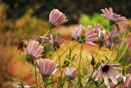 Un rincón florido