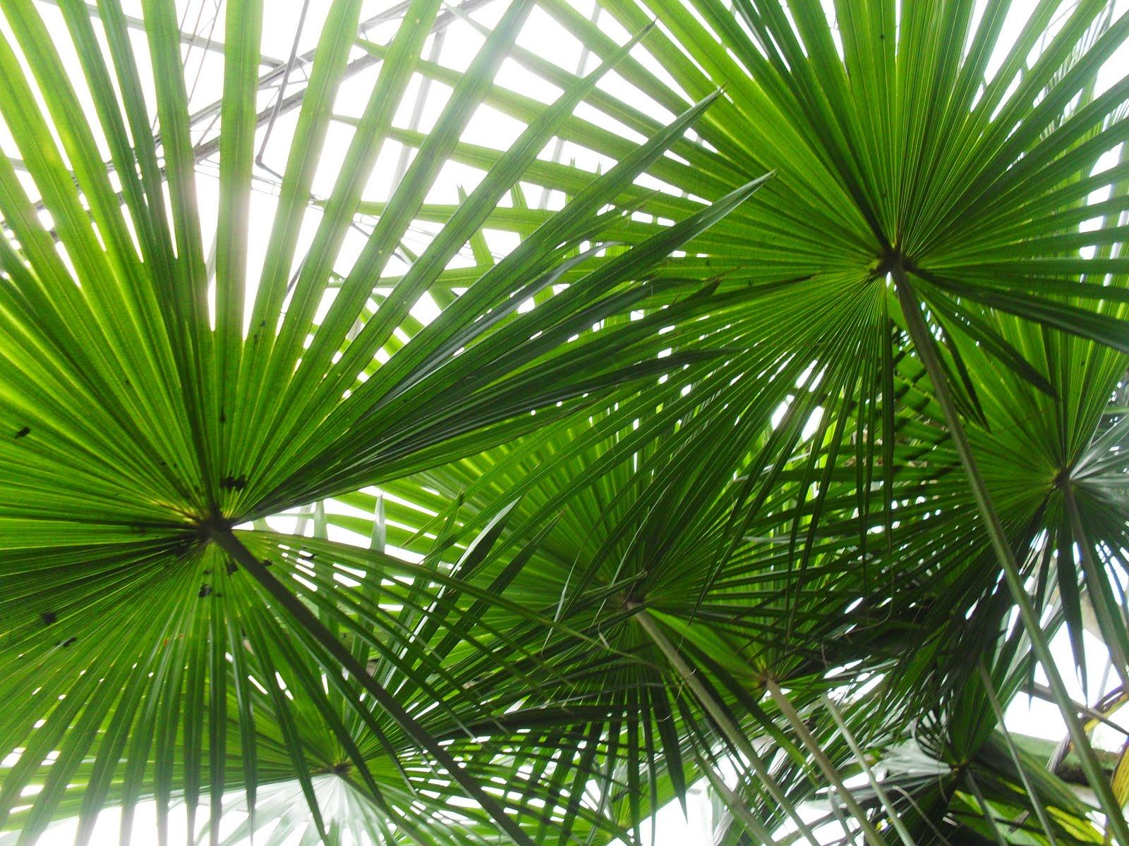 Plantas De La Selva Related Keywords & Suggestions  Plantas De La