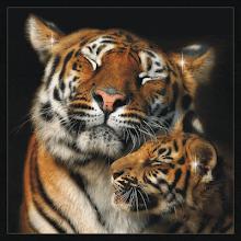 Tigres da Siberia