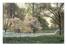 Serene Dogwood