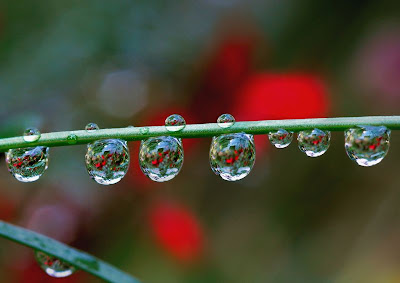 photos of rain droplets