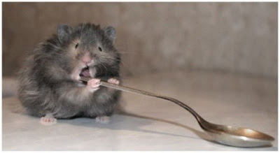 Funny Rat Picture With A Spoon