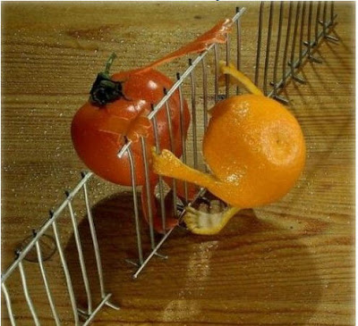 Unusual Orange and Tomato Photo