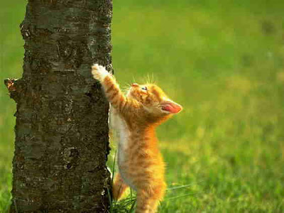 Cat Trying To Climb Tree