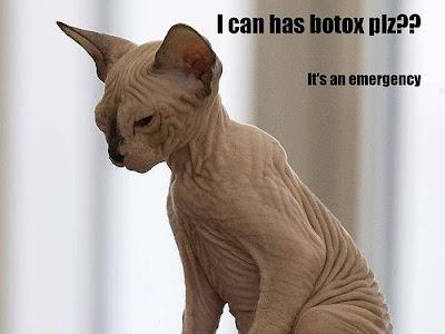 Cat CatSphinxICanHasBotoxPleaseItsA Le botox peut il soigner les acouphènes ?