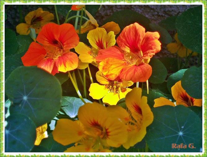 Mi blog de jardinería. Click en la foto