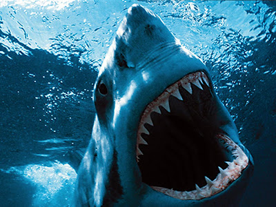 is the great white shark still at monterey bay aquarium the best