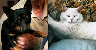 Oscar the dog and Authur the cat