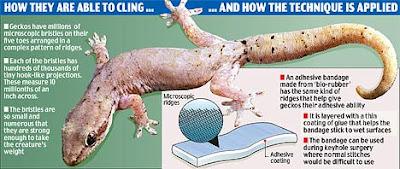 Bandage That Mimics Lizard's Power to Cling