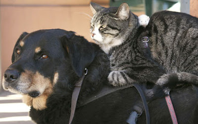 Dog, cat and mice