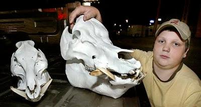 Hog Skull