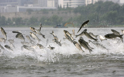 Jumping Fishes