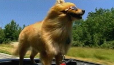 Dodo, the daredevil dog