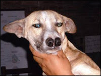 Xingu, the double-nosed dog