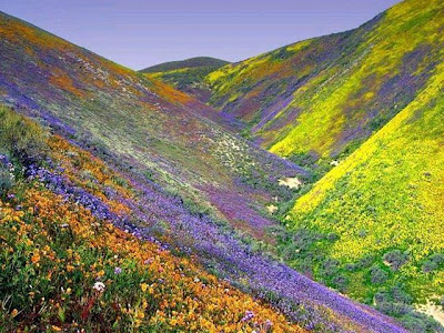 Colourful and beautiful flowers covering a hillside