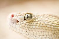 A snake head
