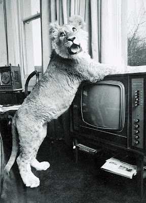 Christian, the lion