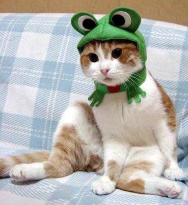 [Cat.jpg]