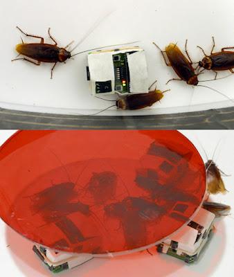 Robo-Roaches