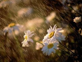 margaritas-lluvia
