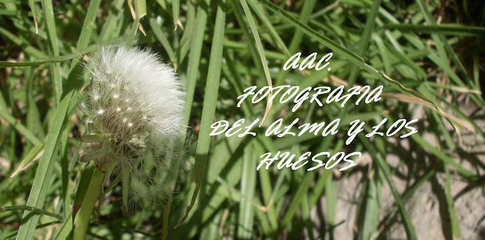 FoTos de A.A.C ( aac fotografia)