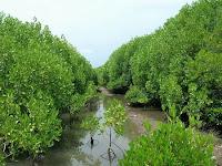 Yang kedua yaitu hutan mangrove bali