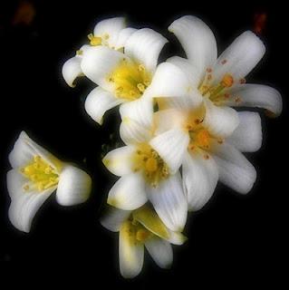 http://1.bp.blogspot.com/_oxNH5Gzf9_Y/S5WgVOeB4dI/AAAAAAAAAaw/B7OMrHqXogI/s320/cheiro+de+jasmim.jpg