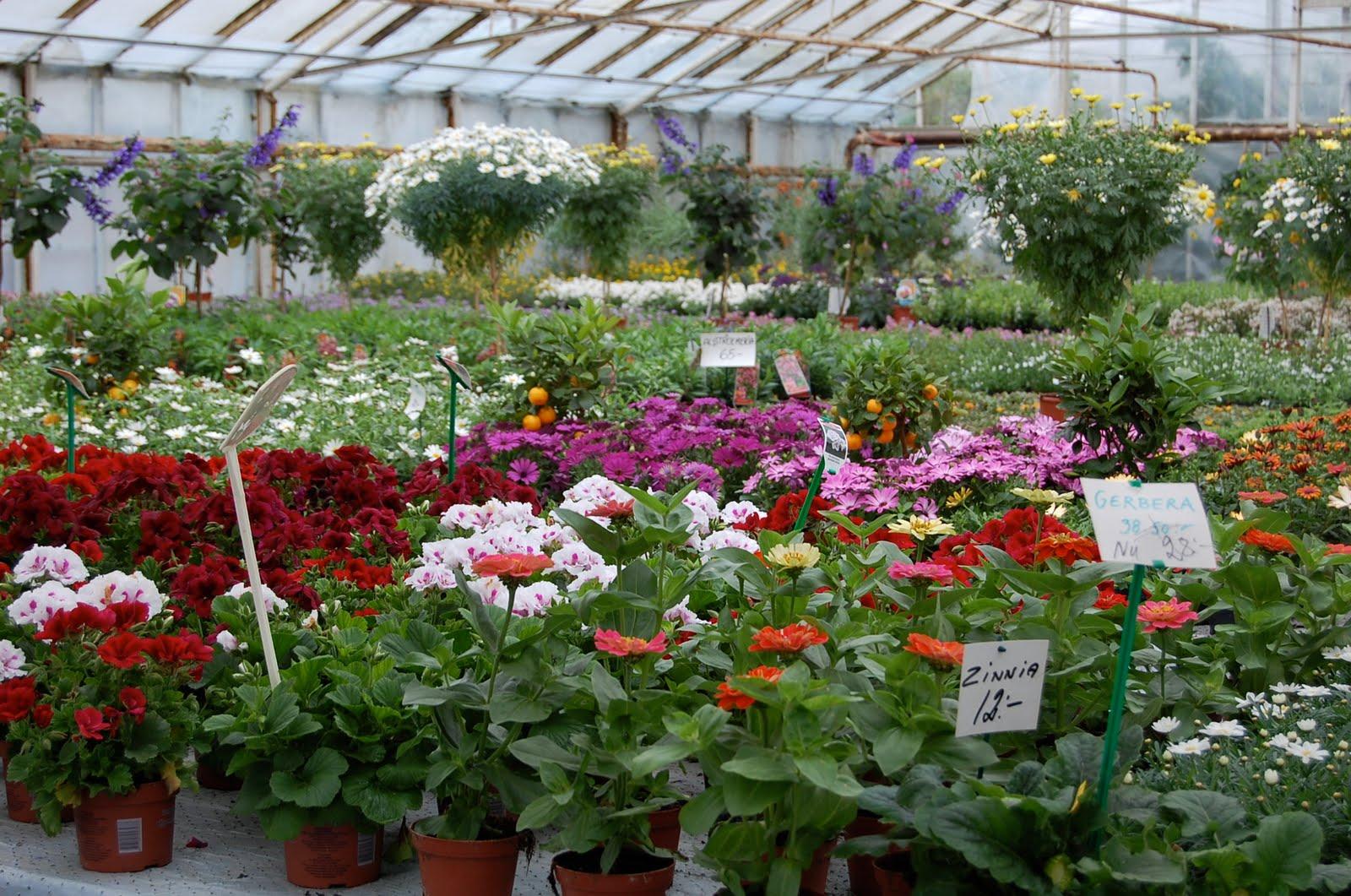 högs blommor handelsträdgård