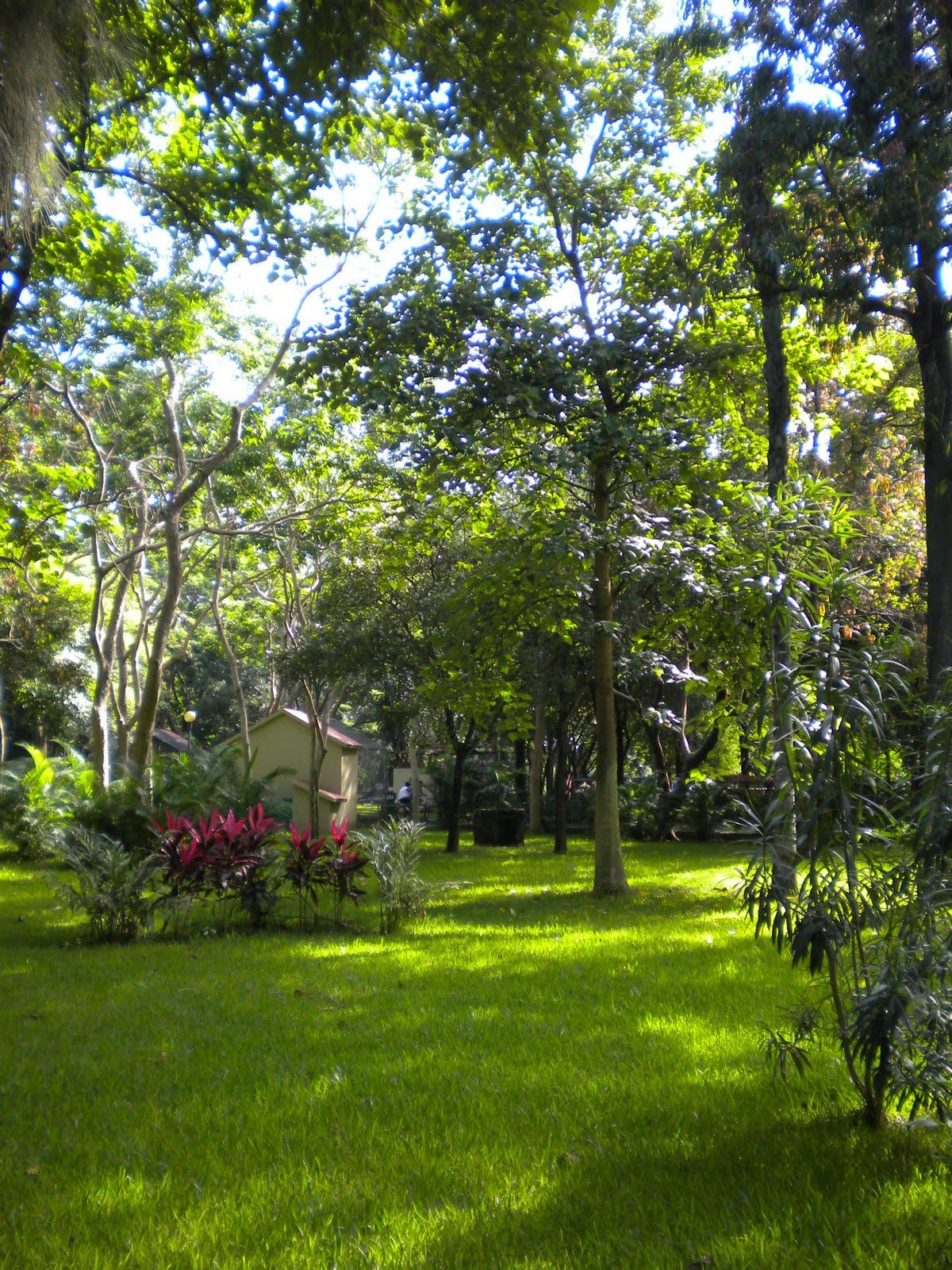 Decoracion de jardines estancias y fiestas en parques for Parques y jardines