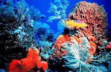 Blog amigo dos Recifes de Coral