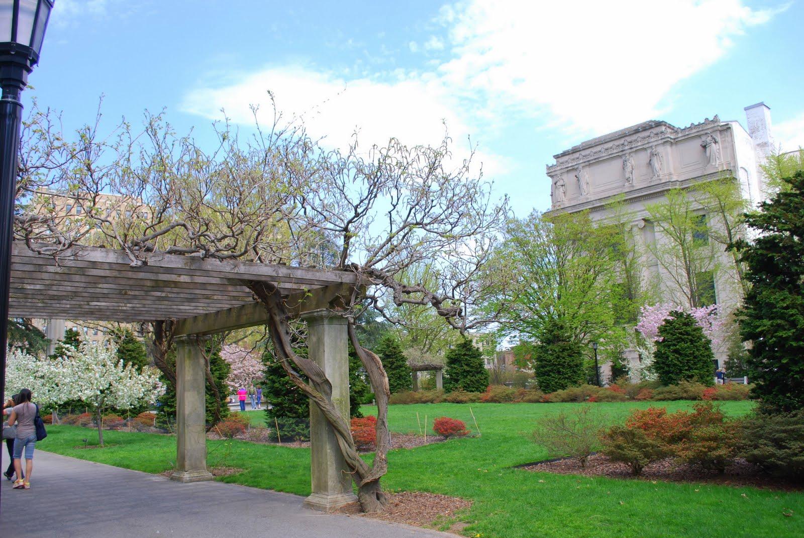 mille fiori favoriti magnolia trees in the brooklyn botanic garden
