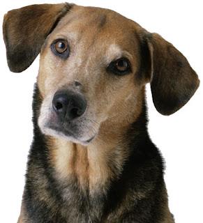 Psychiatric Service Dog Trainers Little Rock