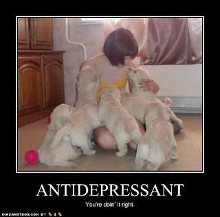 Side Effects Prozac Dogs