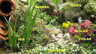 Diario de mi jard n combinaciones de plantas for Plantas para mi jardin