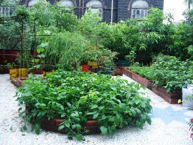 Urban leaves india invitation to city farming for Terrace 6 indore address