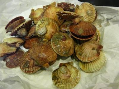 las conchas les habían llegado esa mañana pero no estaban muy frescas
