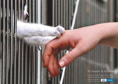 Carinho aos animais