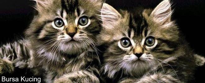 Bursa Kucing