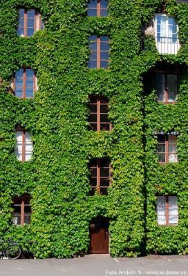 växthus, green house, murgröna, foto anders n
