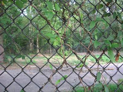 fence separating public from Zoo-controlled forest in Overton Park, Memphis