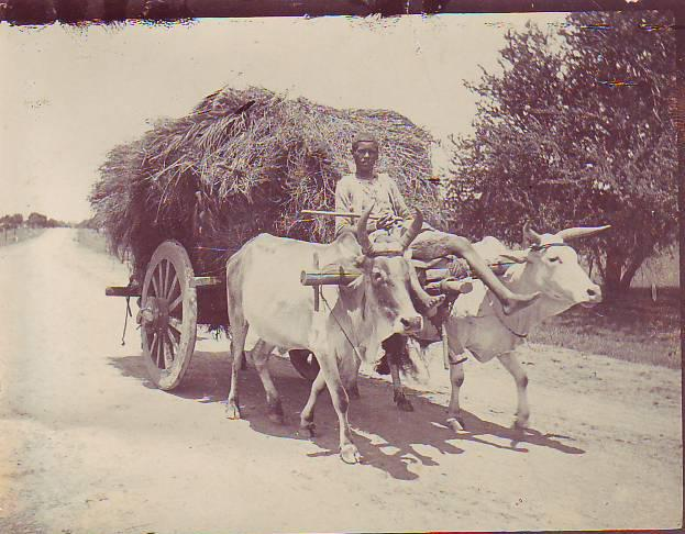 [India+1910_6.jpg]