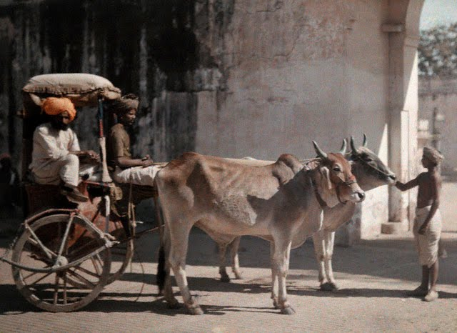 A cattle-drawn carriage carries Jaipur's aristocracy - 1926