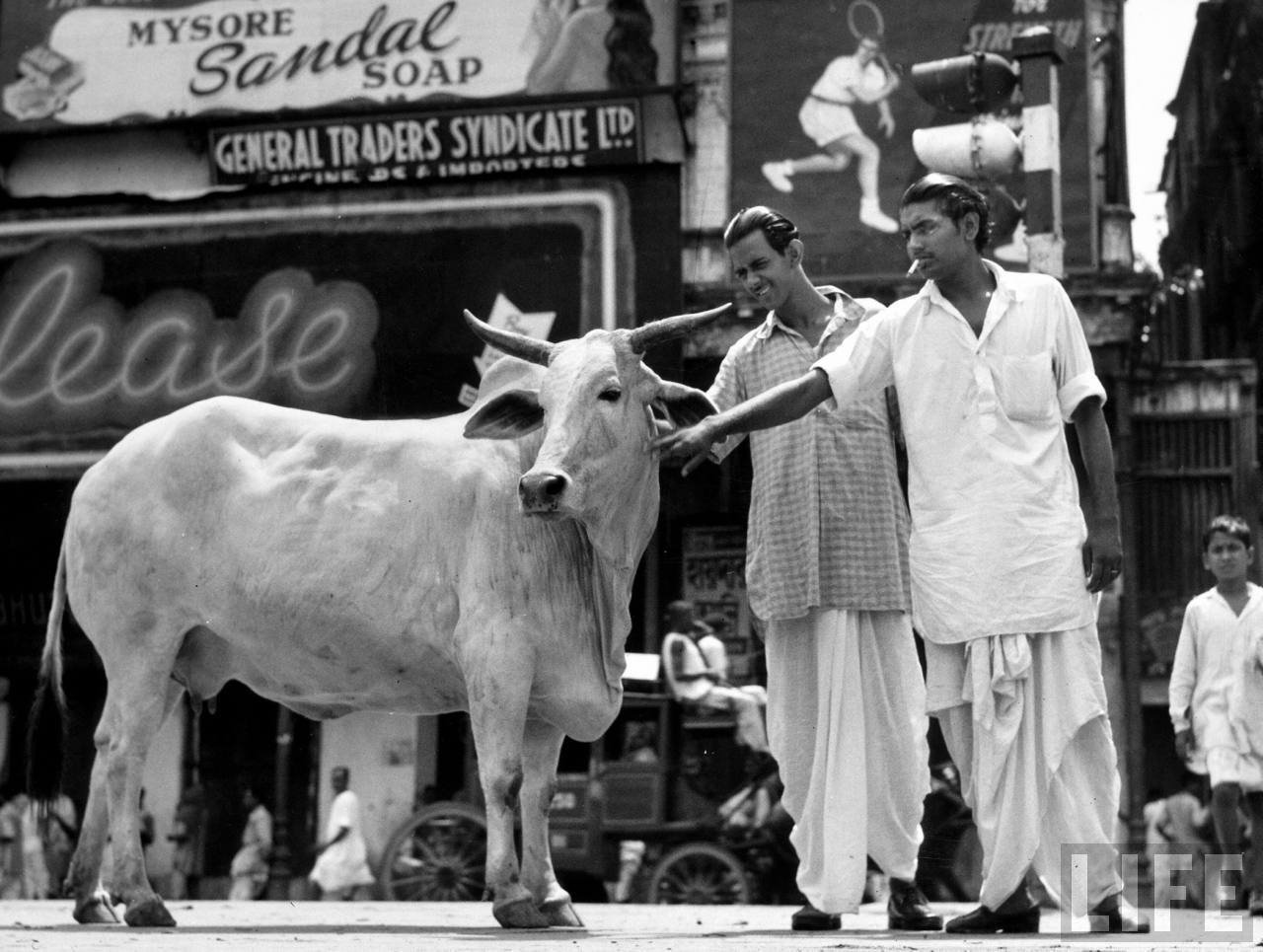 Two men touching a cow on a busy city street - 1946