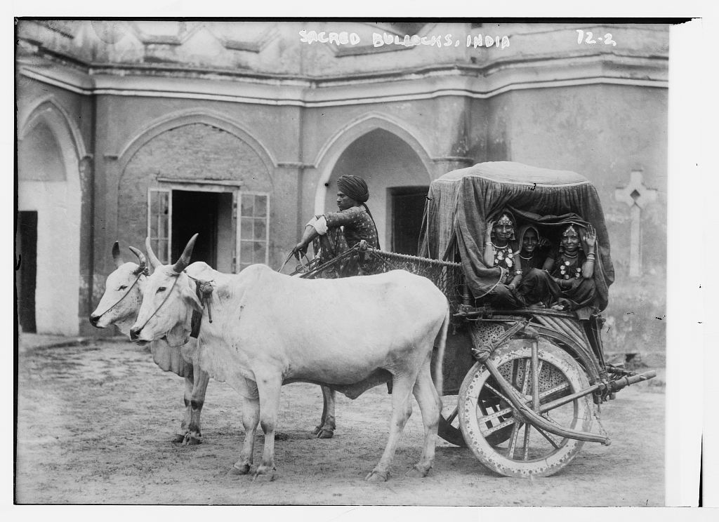 Nautch Girls in Bullock Cart - India