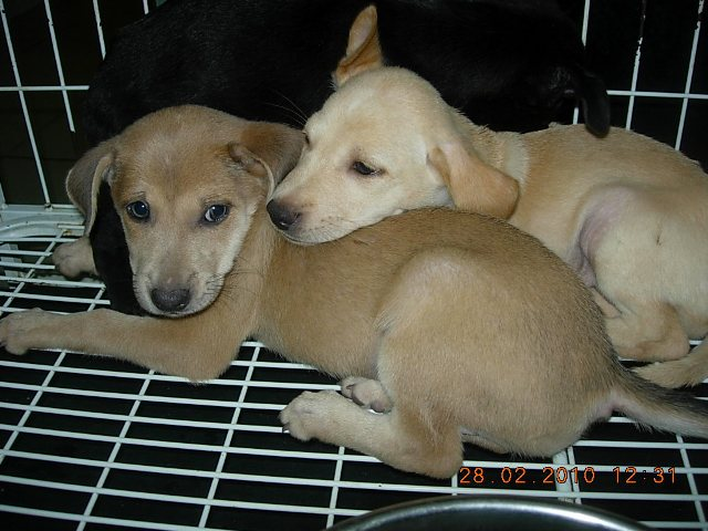 Small Dog Adoption Portland Oregon