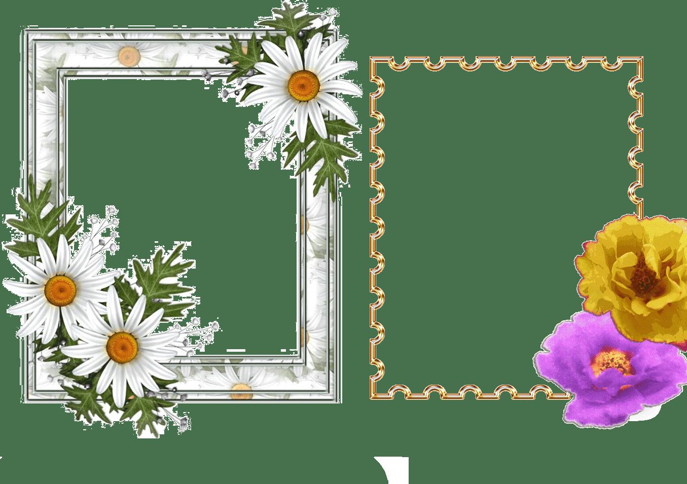 Imagenes de rosas | Imagenes y Fondos