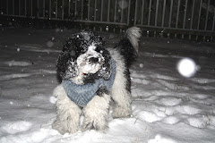 Pup's First Snow!