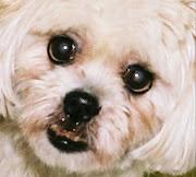 lily, aka 'lilliput' (1995-2006)
